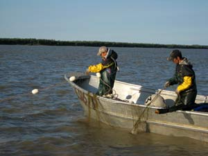 net pulling on the yukon river